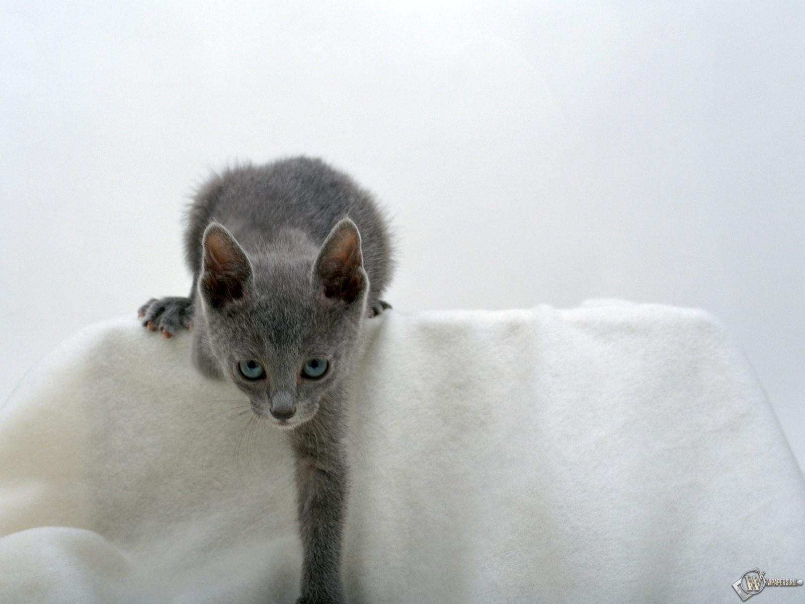 Кошка - пантера 1600x1200