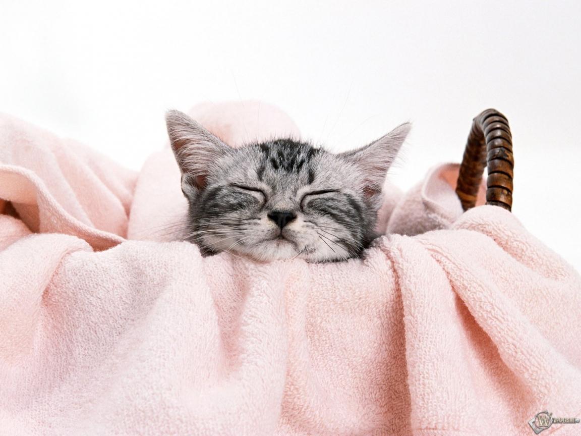 Котенок спит в корзинке 1152x864