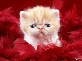 Обои Уставший котенок: , Кошки