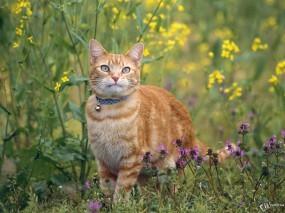Обои Гламурная киса: , Кошки