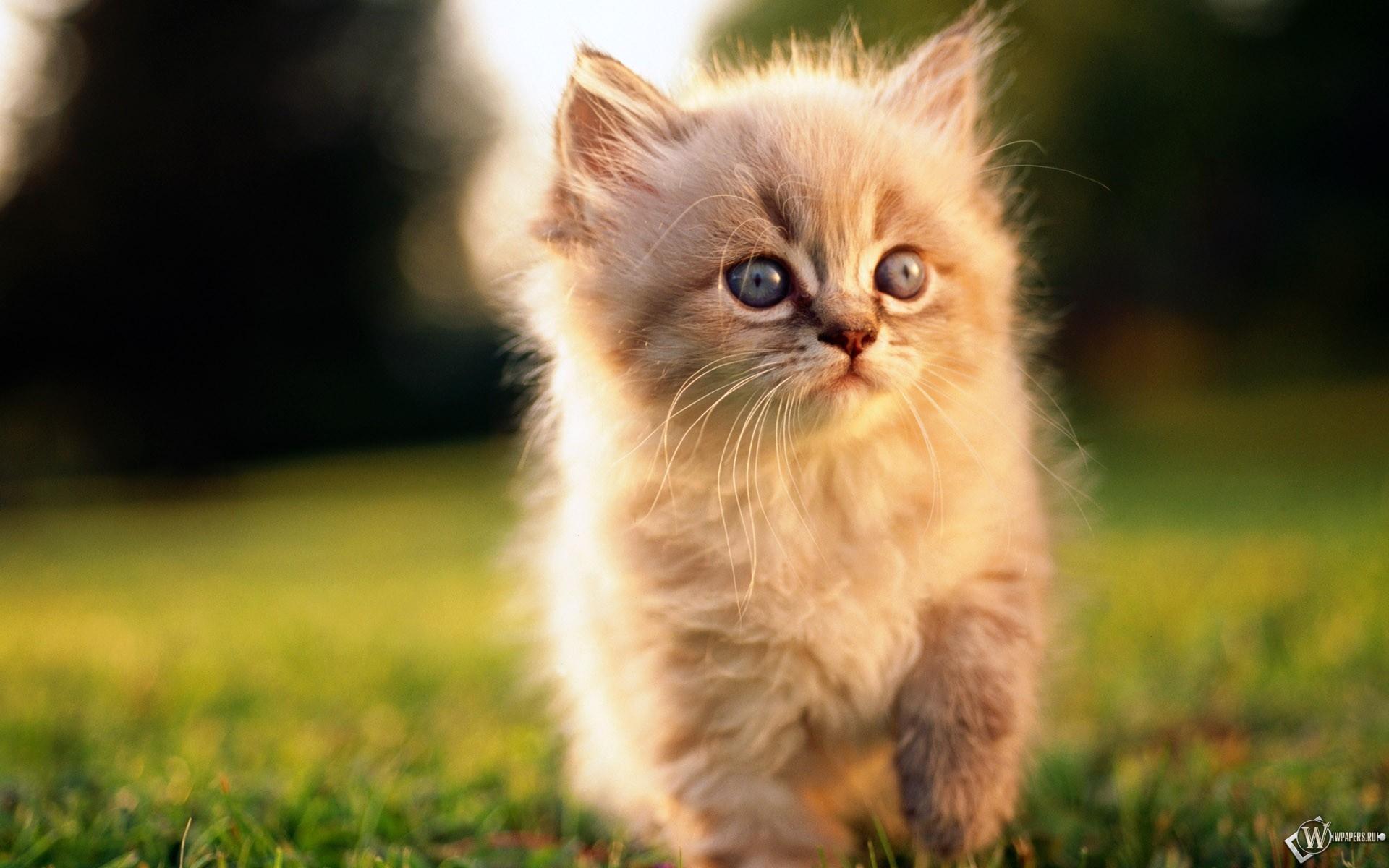 Заинтересованный котенок 1920x1200