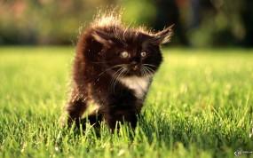 Обои Испуганый котенок: , Кошки