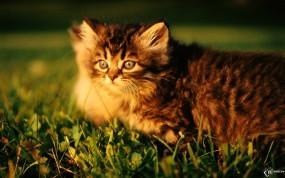 Обои Котята гуляют: , Кошки