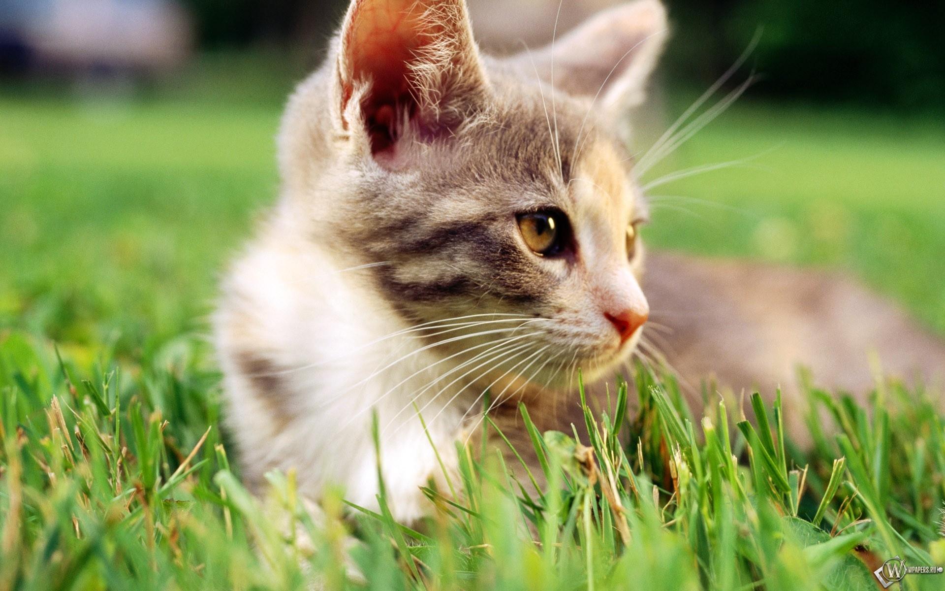 Кот в траве 1920x1200