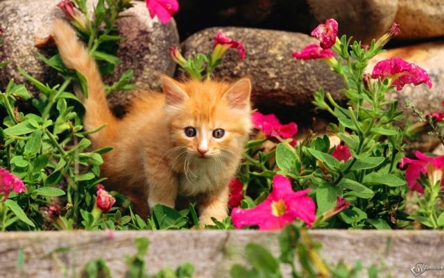 Котенок в клумбе