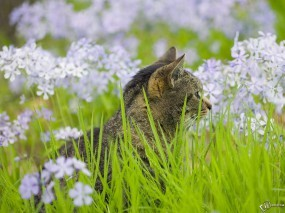 Обои Котенок в траве: Цветочки, Трава, Котёнок, Кошки