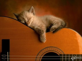 Обои Котенок на гитаре: Гитара, Котёнок, Кошки