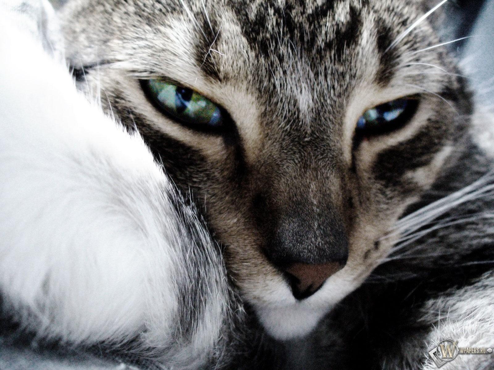 Мордашка кошки 1600x1200