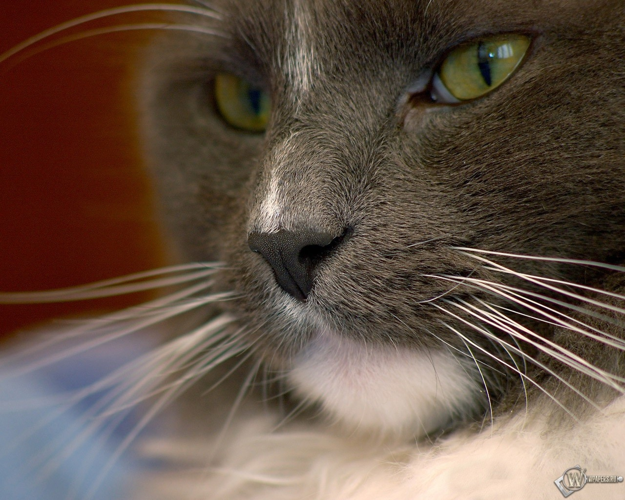 Зеленоглазый кот 1280x1024