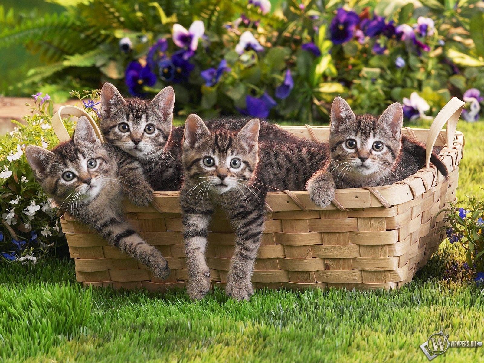 Котята в корзинке 1600x1200