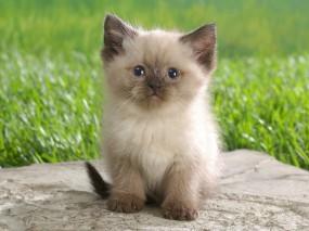Обои Котенок: Трава, Котёнок, Кошки