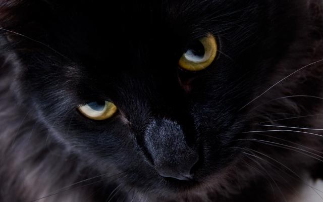 Взгляд черной кошки