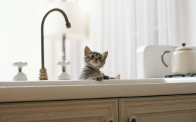 Обои Котята в мойке: Котята, Кухня, Кран, Мойка, Кошки