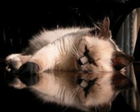 Обои Кошак спит: Отражение, Кошак, Relax, Кошки