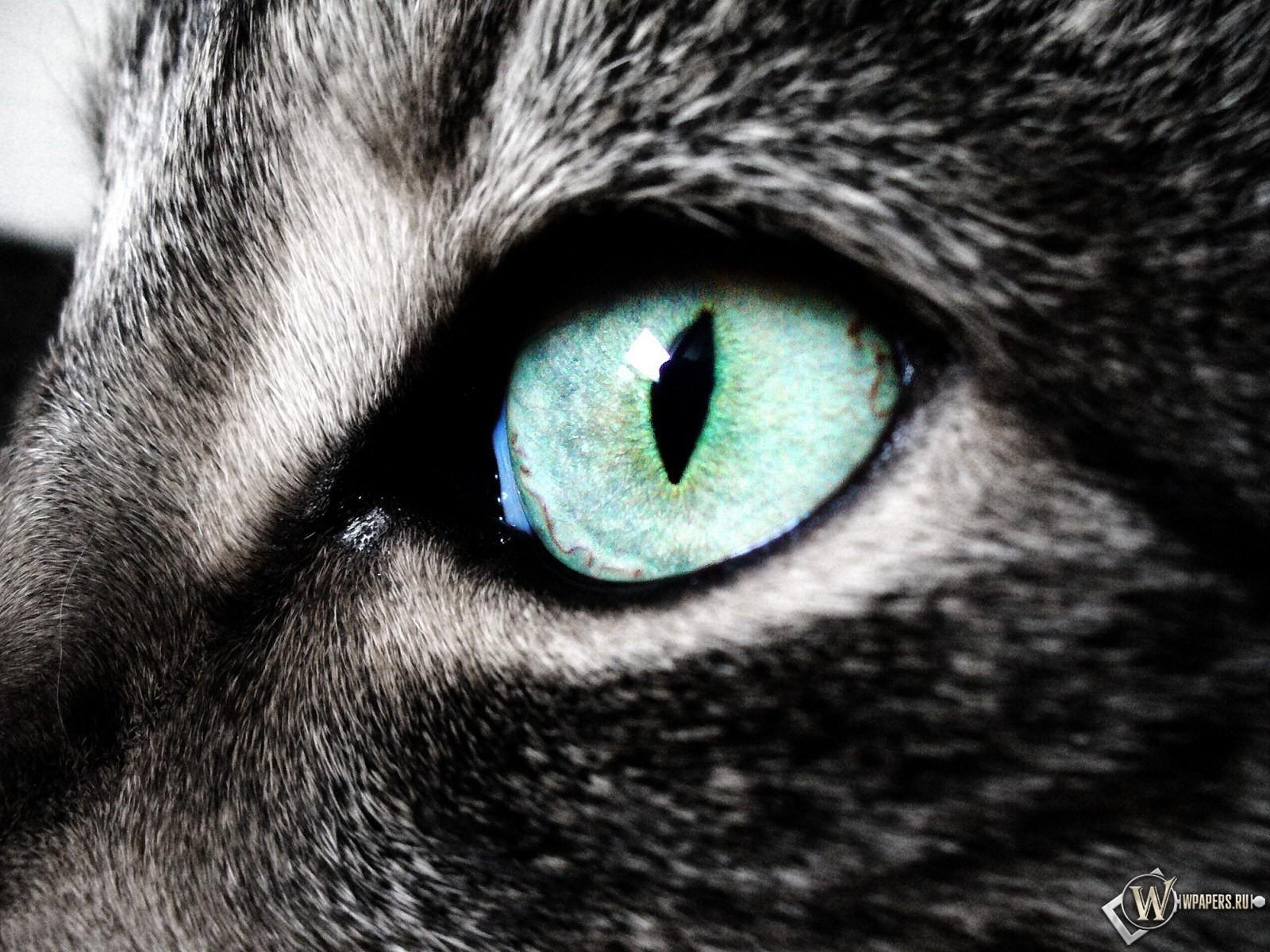 Кошкин глаз 1600x1200
