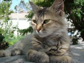 Обои Котэ отдыхает: Отдых, Котэ, Кошки