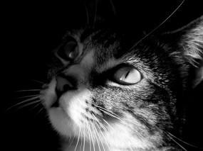 Кот смотрит на свет