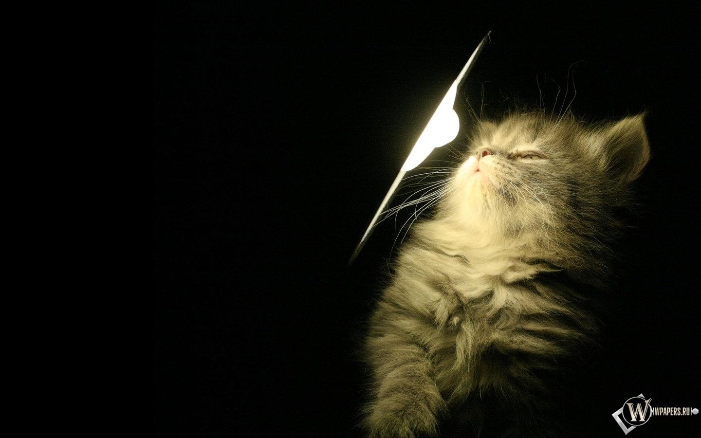 Котенок у лампы 1440x900