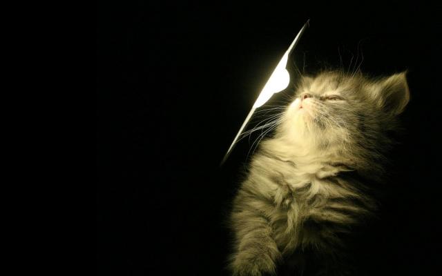 Котенок у лампы