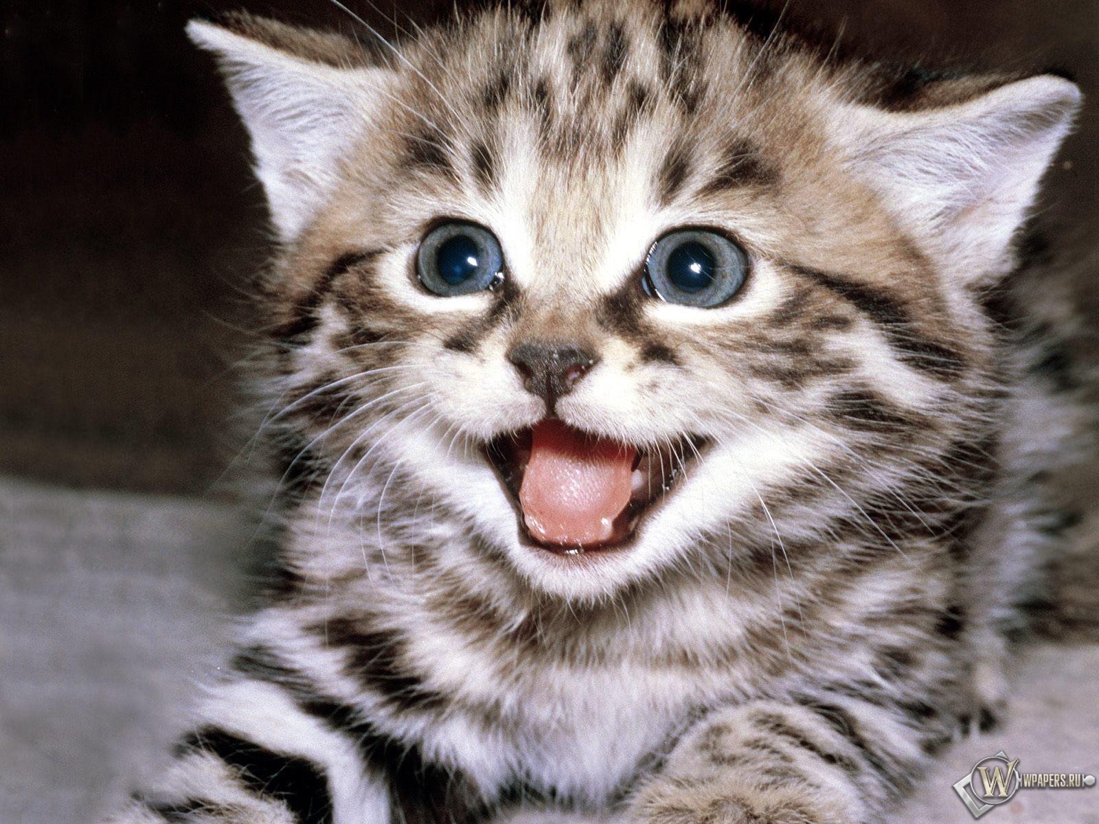выпуска, сонник яркий кот рычит секреты Йоги