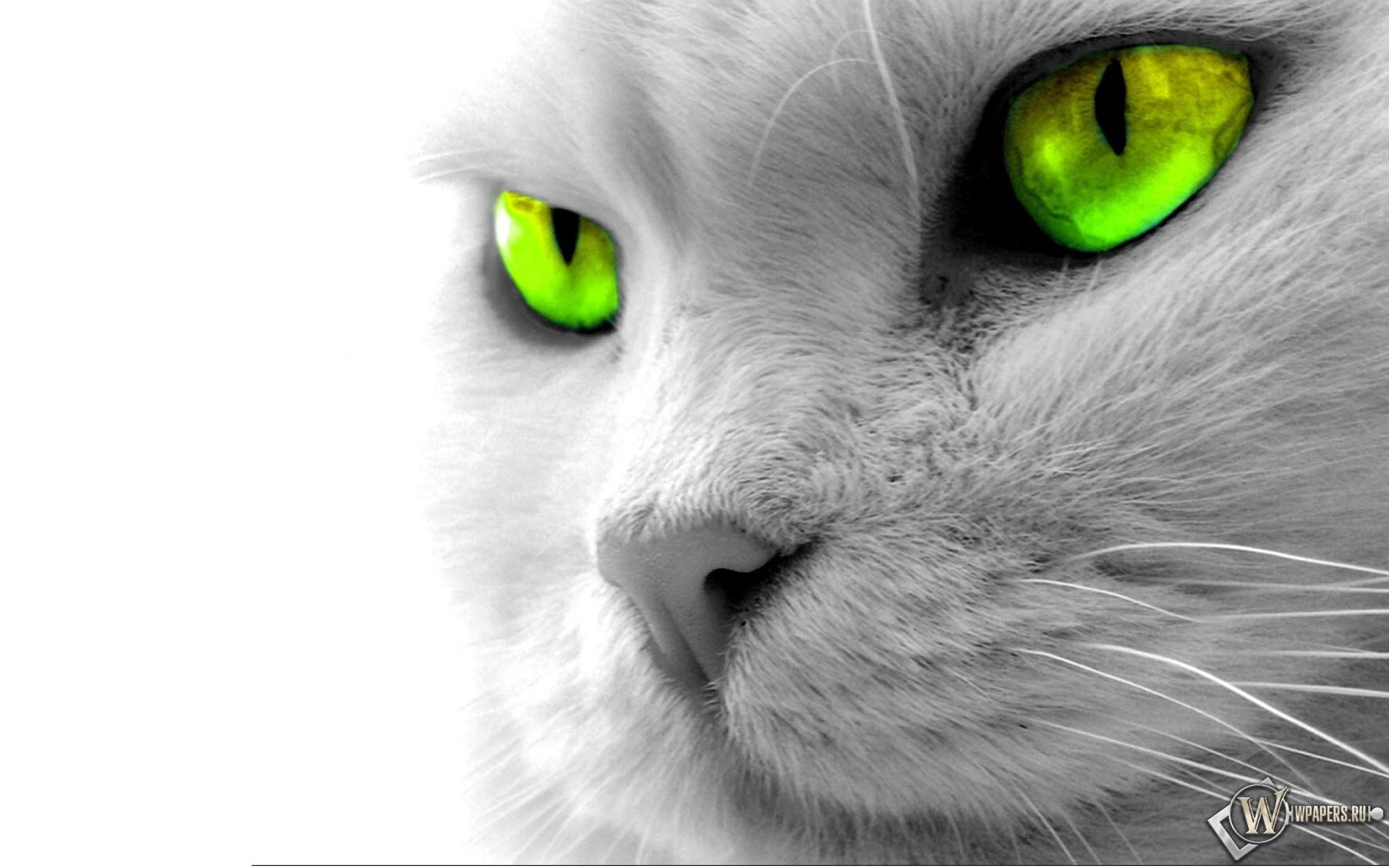 Кошкины зеленые глаза 1920x1200