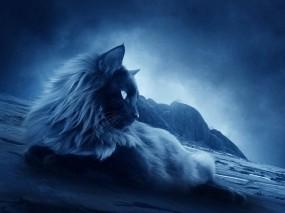 Обои Ночной кот: Ночь, Сумерки, Кот, Кошки