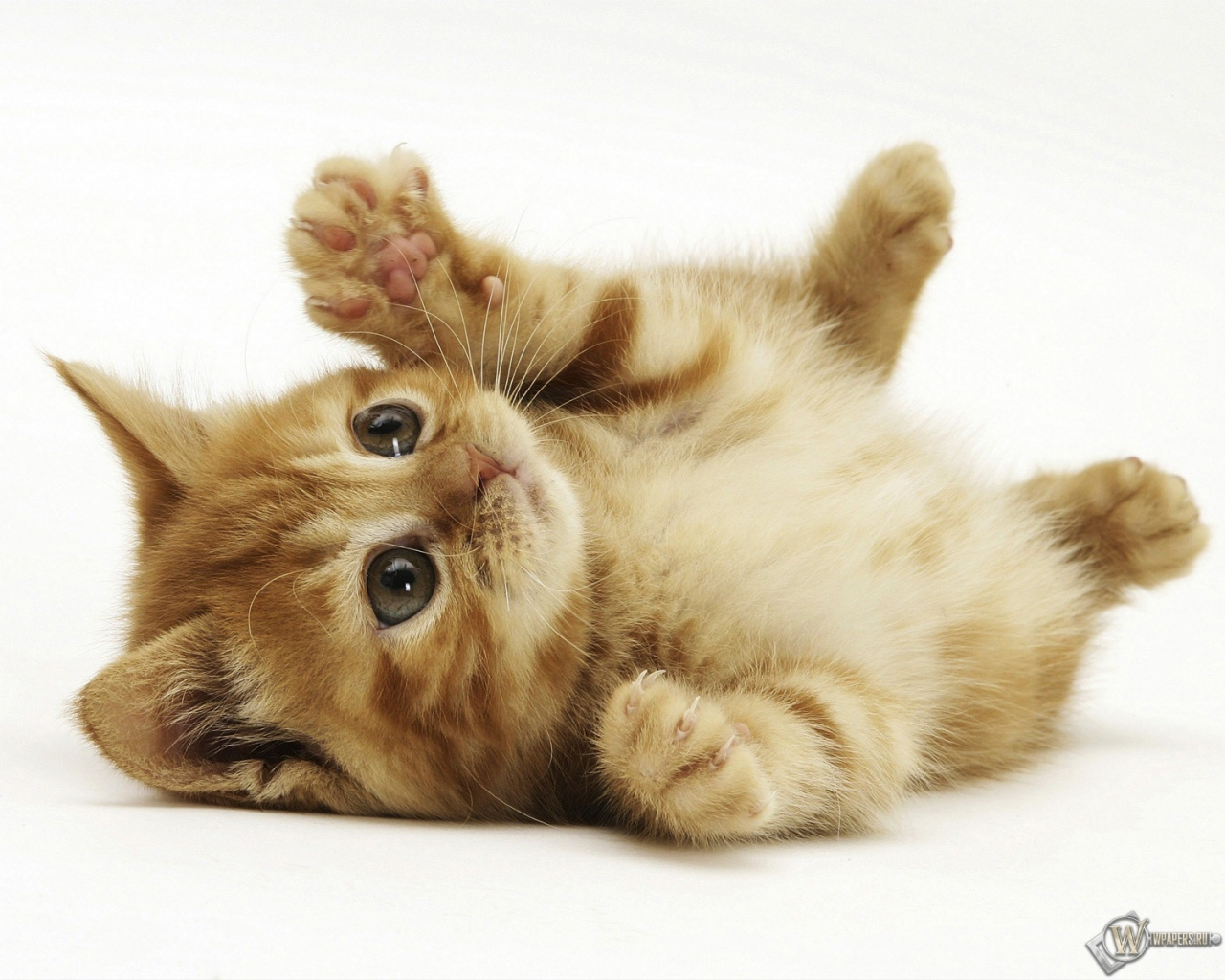 на рабочий стол картинки котята