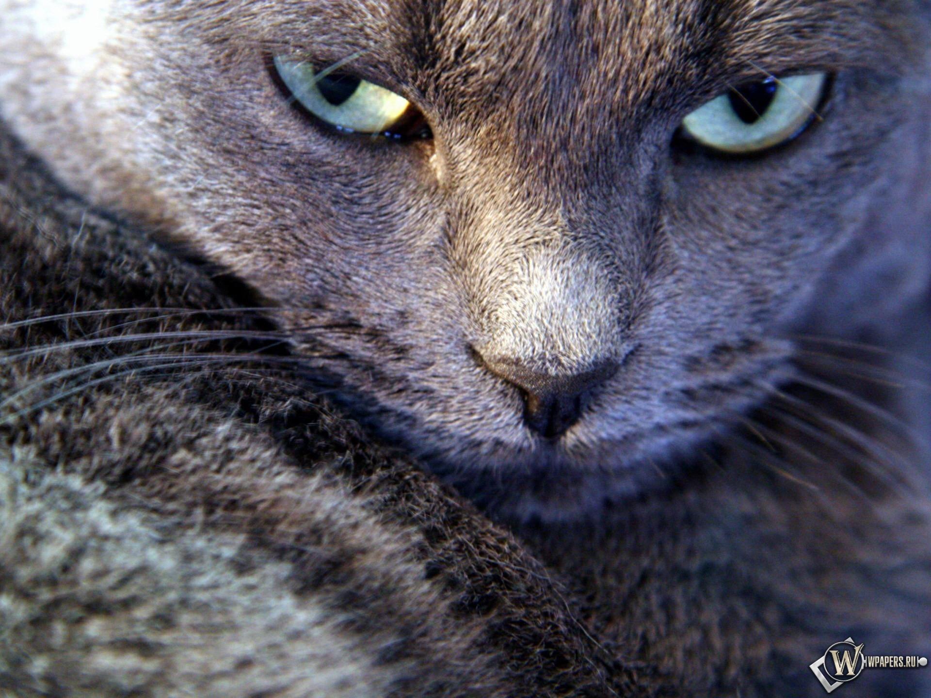 Серьезный взгляд котэ 1920x1440