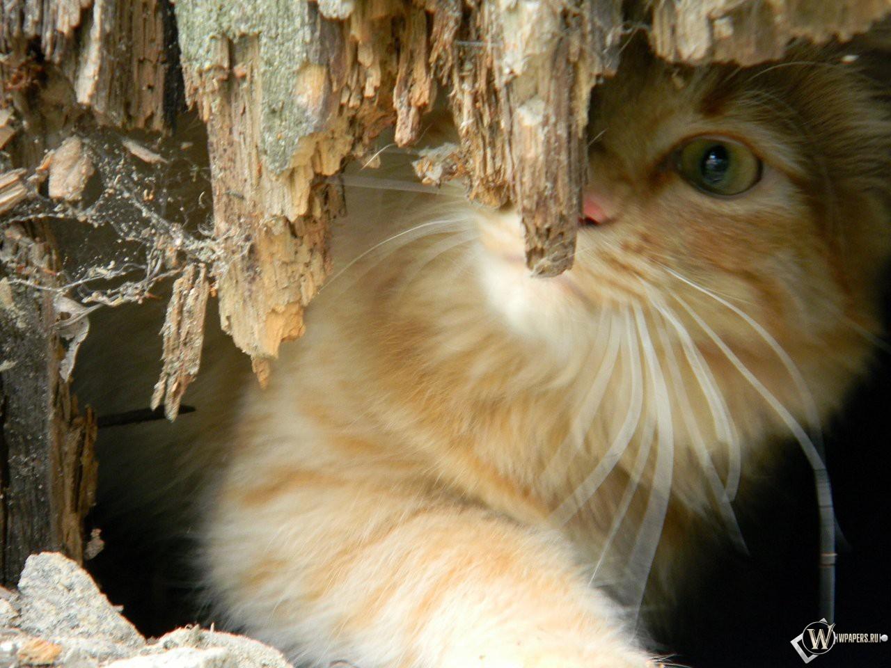 Котенок за корягой 1280x960