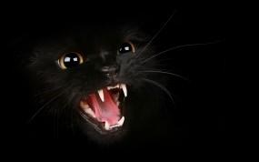 Обои Злобный кошидзе: Хищник, Кошка, Чёрный фон, Чёрная, Злость, Кошки