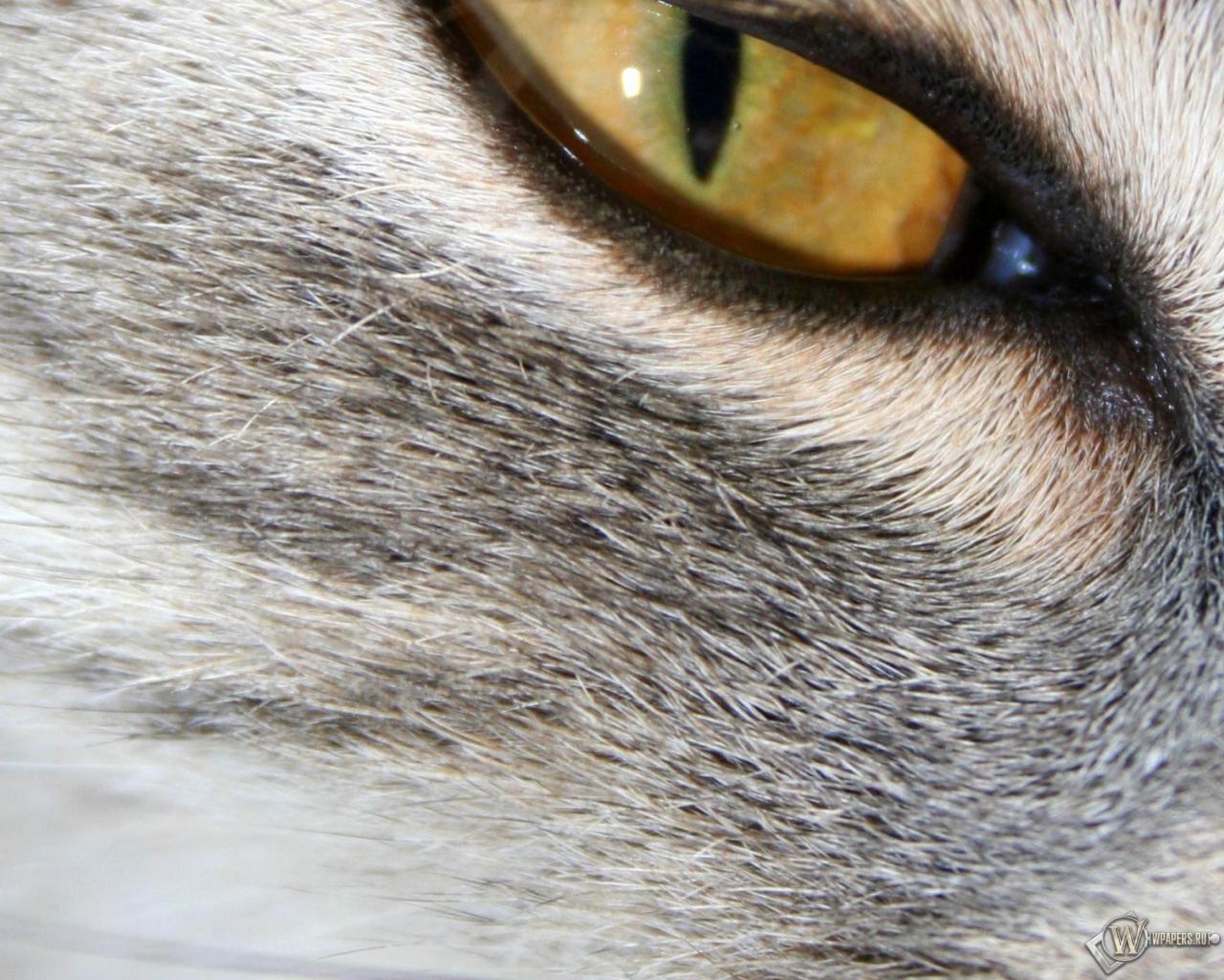 Кошачий глаз 1280x1024