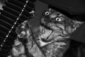 Обои Котик точит когти: Кот, Когти, Ч/б, Кошки