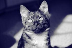 Обои кот: Глаза, Кот, Морда, Кошки
