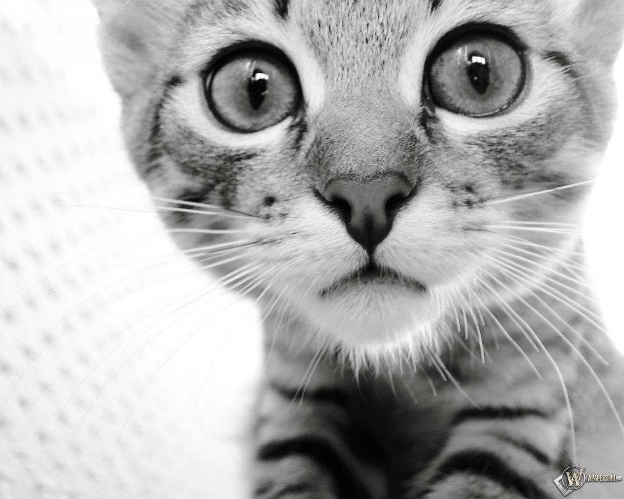 Картинки котик скачать