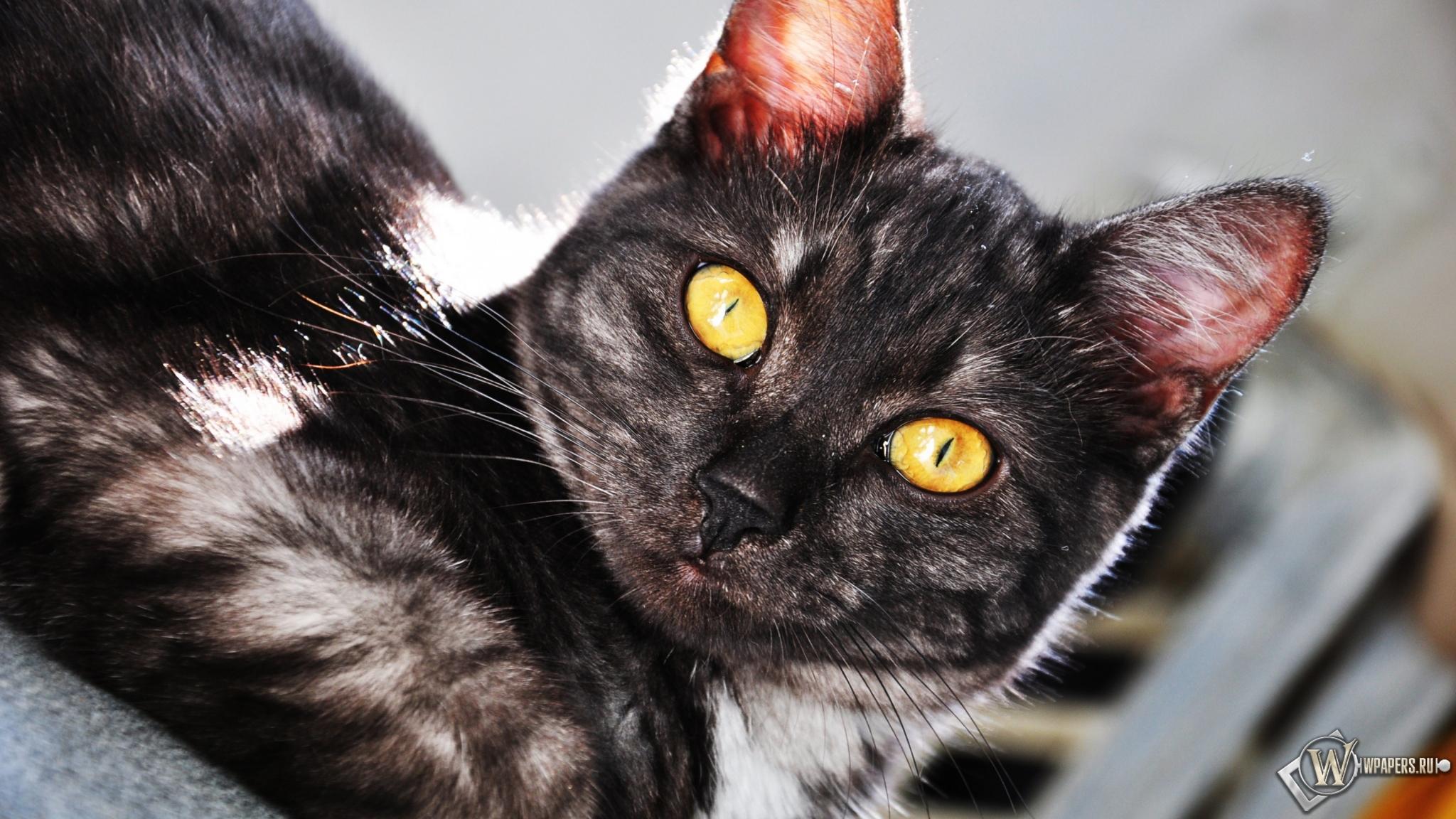 Котик 2048x1152