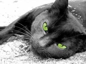 Обои Чёрная кошка лежит: Зеленоглазая, Чёрная кошка, Зелёные глаза, Кошки