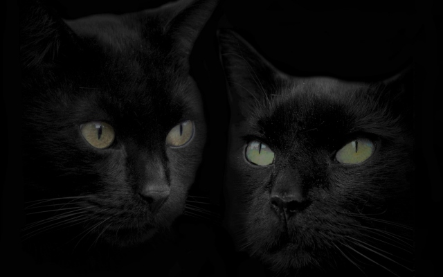 Картины с чёрными котами