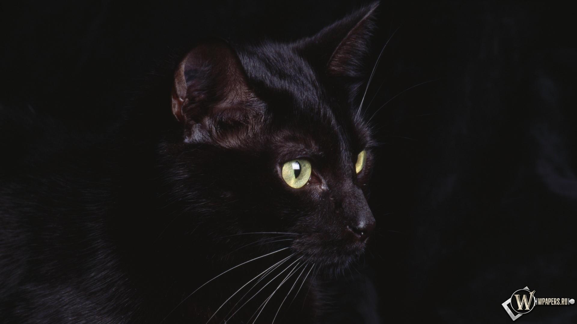 черная кошка 1920x1080