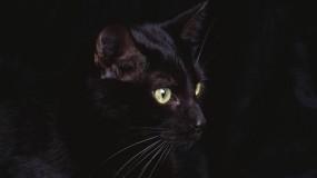 Обои черная кошка: Чёрная кошка, Кошки