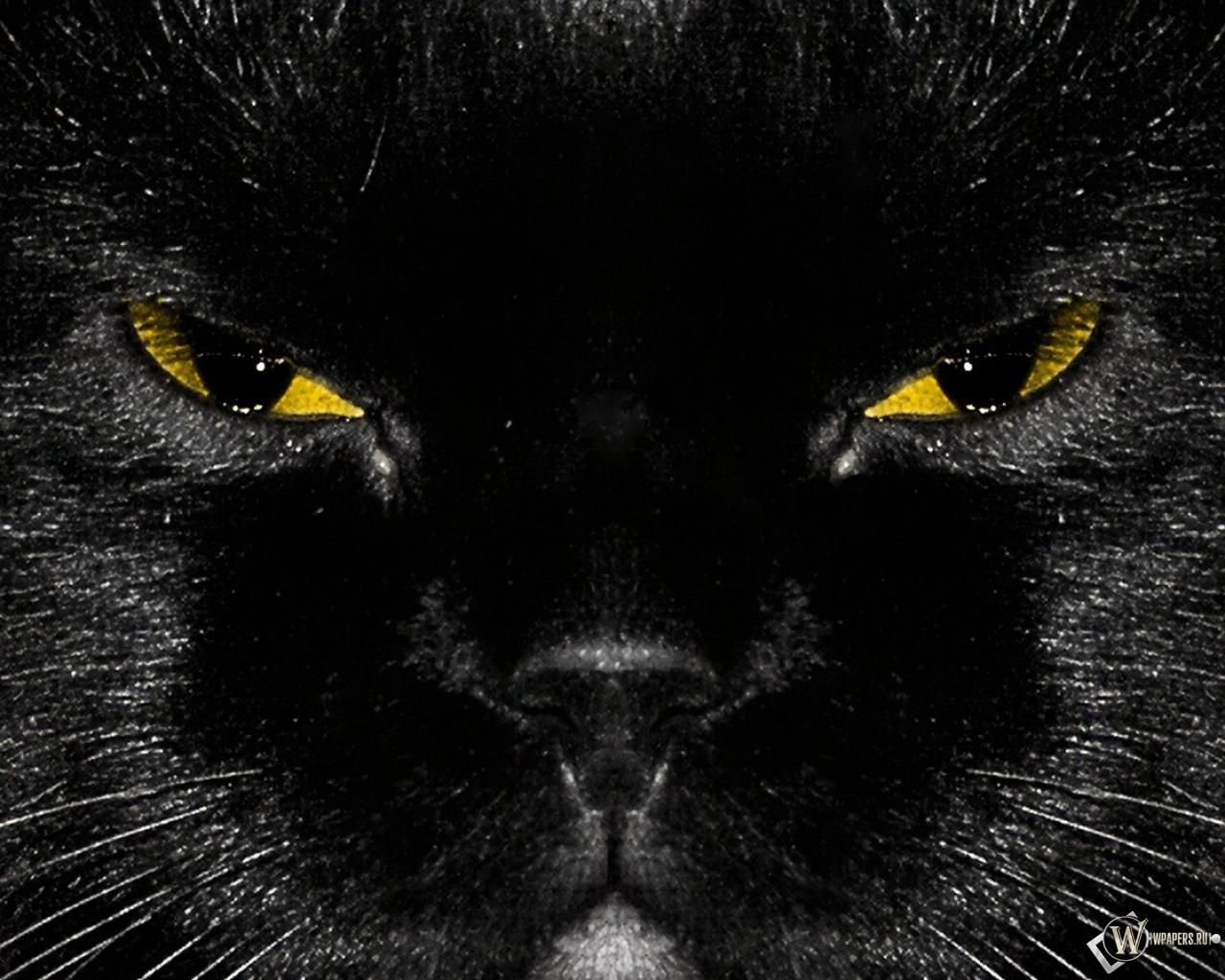 Кошки сайт о кошках  Мурлыка