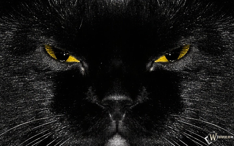 Морда черного кота 1440x900