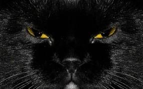 Обои Морда черного кота: Кот, Чёрный, Чёрная кошка, Кошки