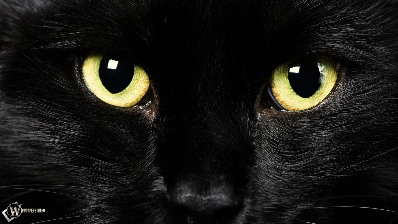Скачать обои Black Cat (Глаза, Морда, Чёрная кошка) для ...