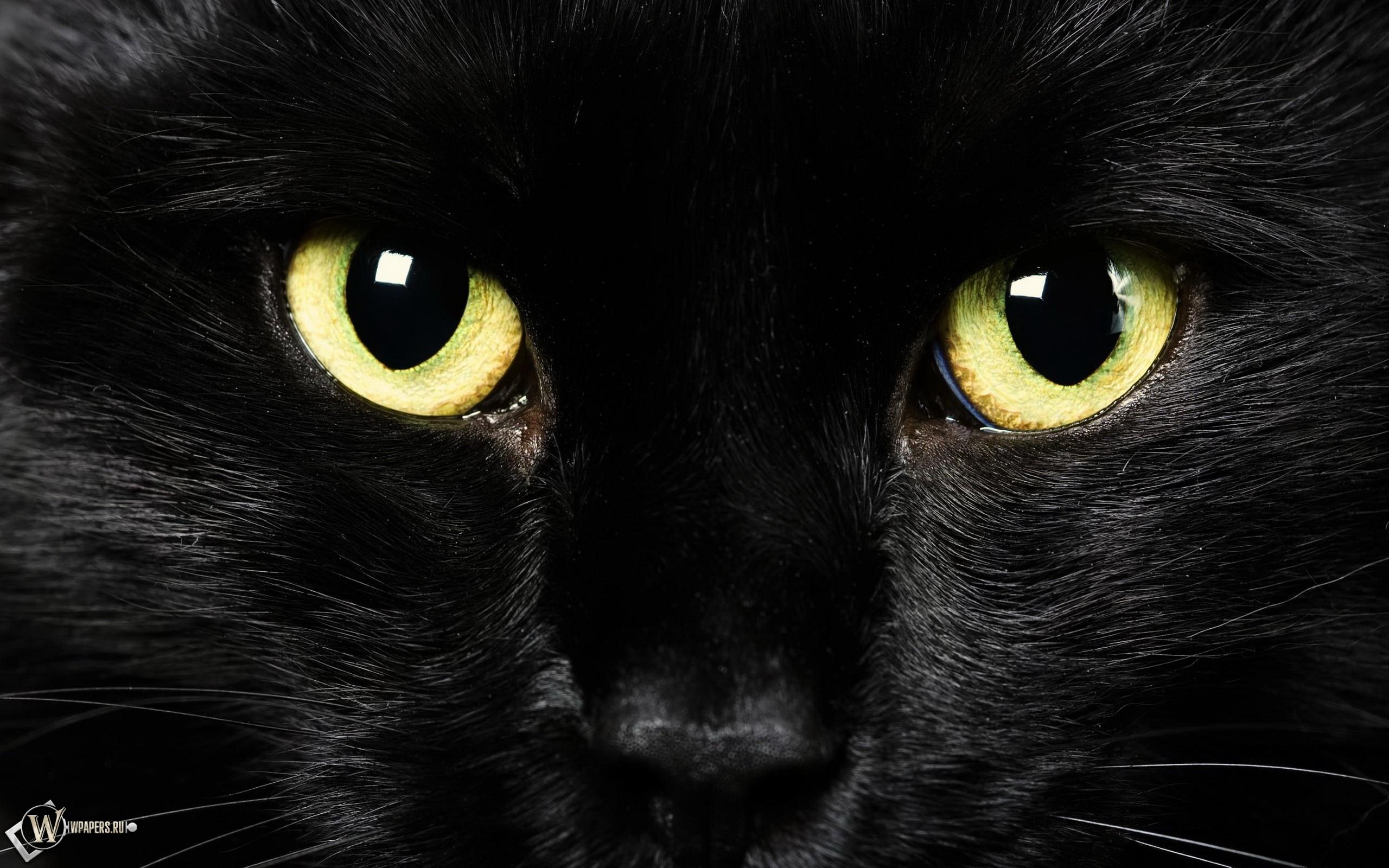 Black Cat 2560x1600