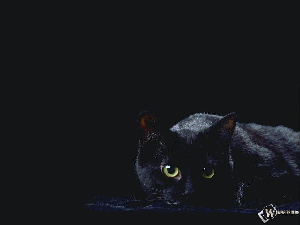 черная кошка 1024x768