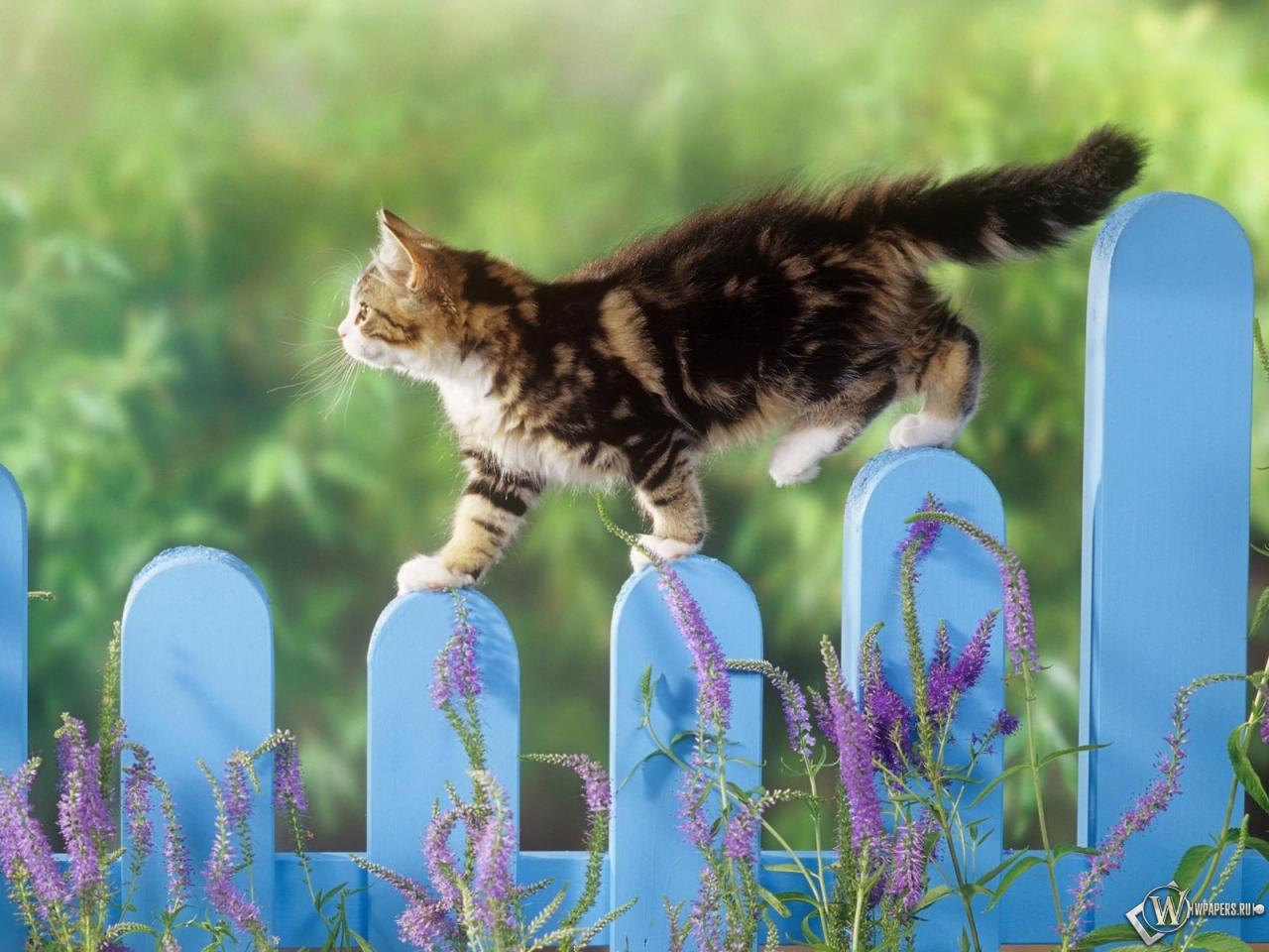 Котенок гуляет по забору 1280x960