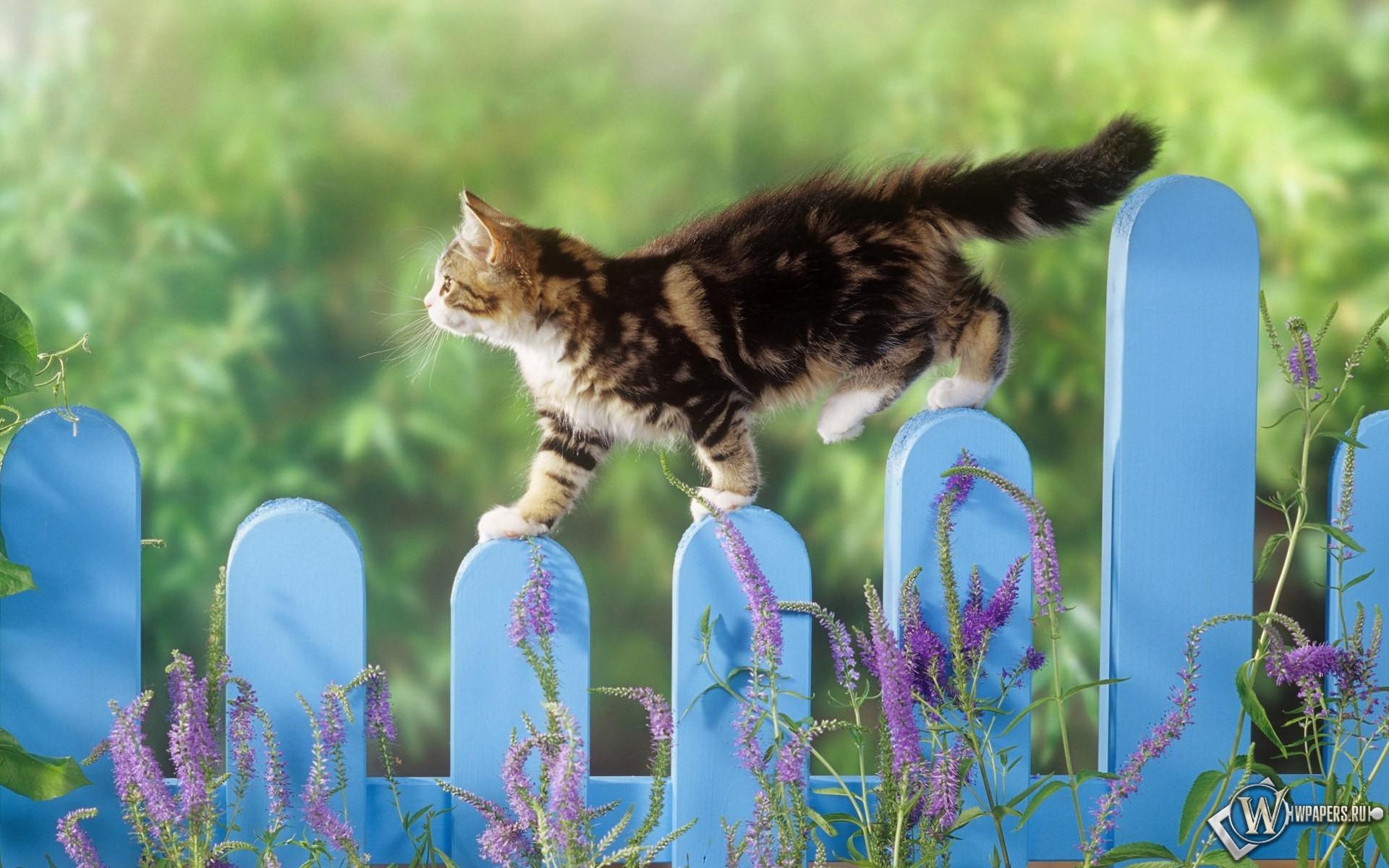 Котенок гуляет по забору 1920x1200