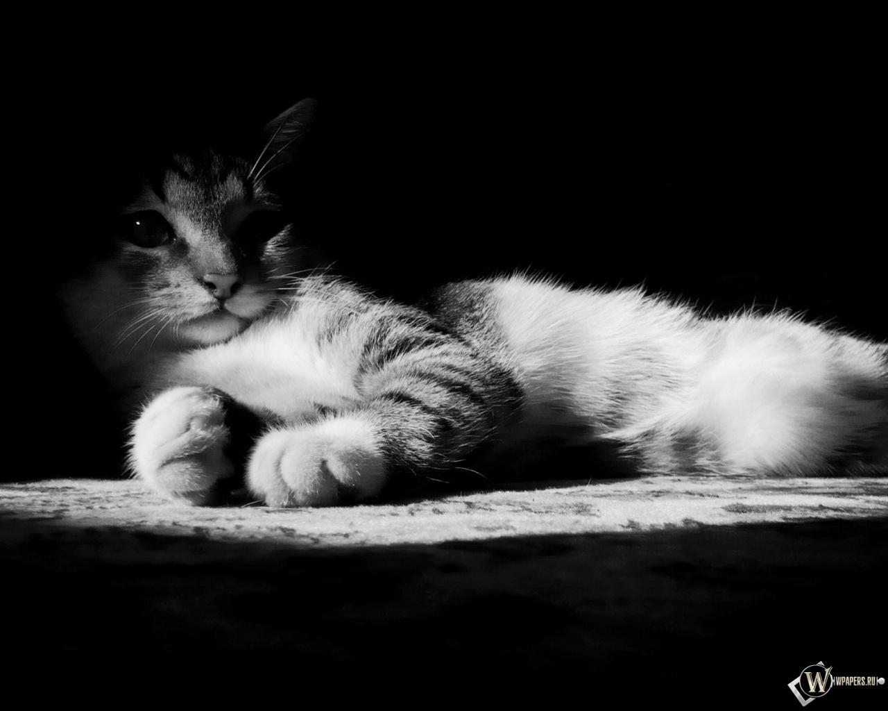 Котик в тени 1280x1024