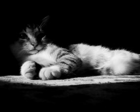 Обои Котик в тени: Свет, Тень, Котик, Кошки