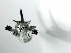 Обои Котёнок в полёте: Полёт, Котёнок, Кошки